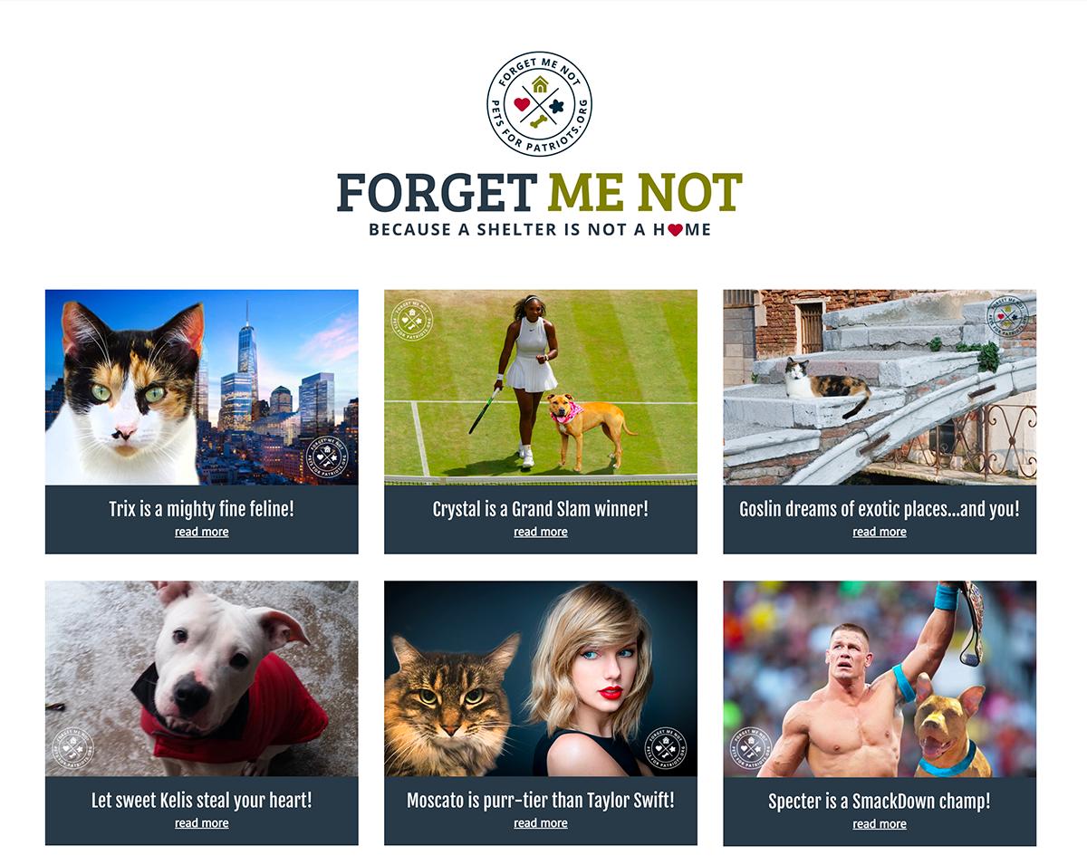 Animal Rescue Campaign