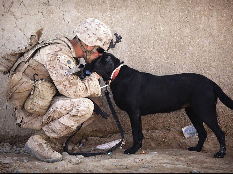 Veteran Animal Rescue